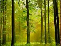 Посадка леса на белорусских территориях, пострадавших от аварии на ЧАЭС, завершится через пять-шесть лет